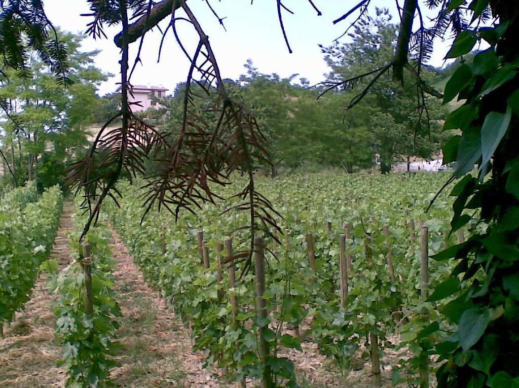 Montelparo (FM) Cabernet Sauvignon